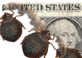 Bed Bug Infestations – How Much Will It Cost You?